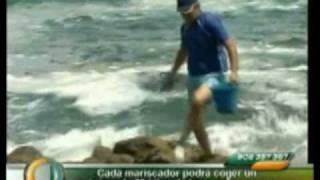 Temporada de lapas – Canarias Directo