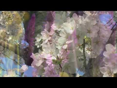 Edelweiss (trad. português)