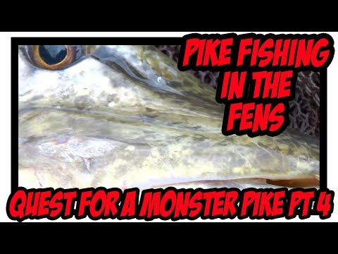 Pike Fishing In The Fens - Quest For A Monster Pike Pt 4