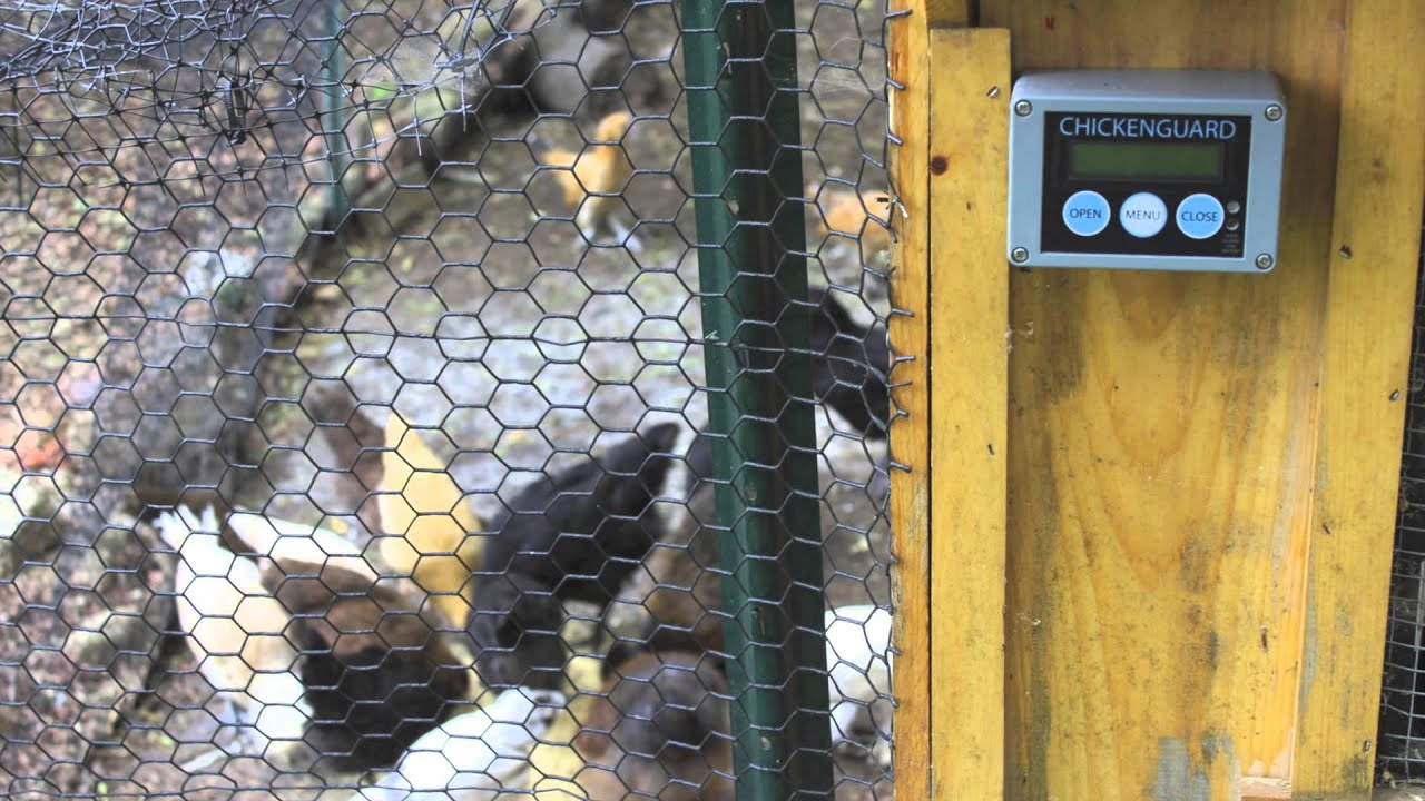 Chicken Guard Review Best Automatic Door On The Market