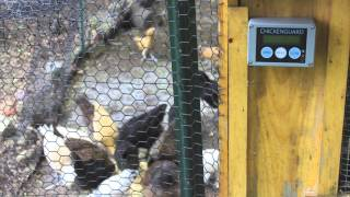 Chicken Guard Review Best Automatic Door On The Market - Light Sensor / Battery Powered
