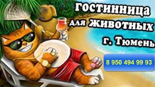 Гостиница для животных -РЫЖИЙ BOSS-