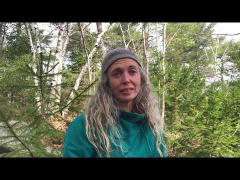 Holistic Herbal Wellness Program Intro