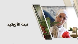 م. أمل القيمري - نبتة الأوركيد