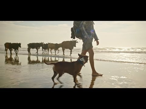 """Bobtail: """"Journey"""" new Ad for Dog Lovers."""