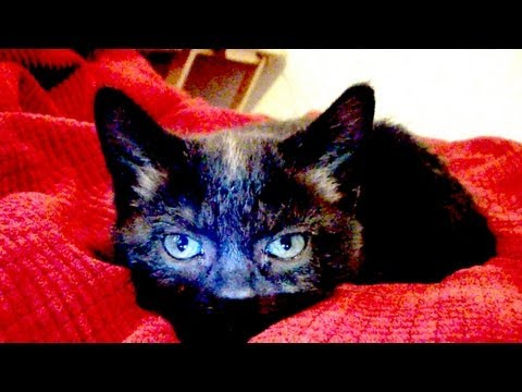 download Talking Kitty Cat 29 - Kitten Sitting