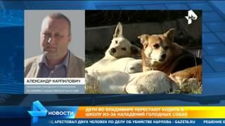 Родители в Владимире не пускают детей в школы из-за бродячих собак