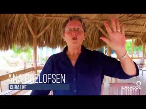 El mundo del Aloe Vera en Curaçao