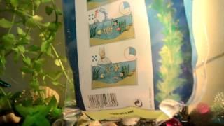 Купили новых рыбок/Заселение в аквариум/(Всем приятного просмотра! Спасибо за лайк! :) Подписывайтесь на канал! Впереди много интересного!, 2016-04-24T06:01:00.000Z)