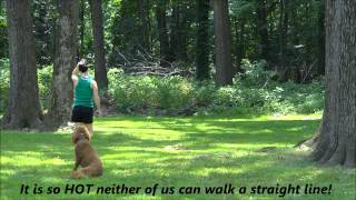 "2-week Board And Train - Ecollar Dog Training, Northern New Jersey ""lucy"""