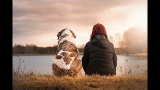 Pourquoi l'absence de notre animal nous est-elle si douloureuse ?
