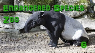 Endangered Species Zoo   Part 6: Malayan Tapirs - Zoo Tycoon 2