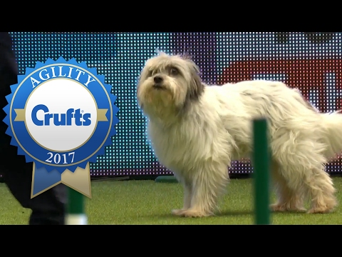 Agility - Kennel Club British Open Agility Final (Part 1) | Crufts 2017
