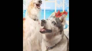 我が家の愛犬2頭の紹介ムービーです!