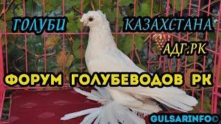 Выставка голубеи / Форум Голубеводов Республики Казахстан. АдгРК г.Шымкент /  Pigeons / doves / dove