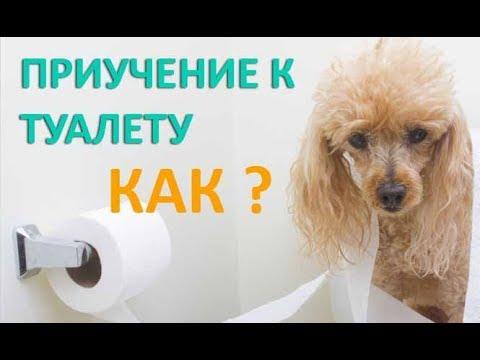 Как приучить щенка к туалету.