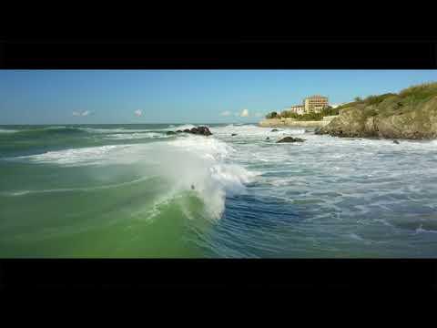 Surf Rex