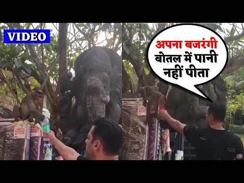 Salman Khan Emotional Moment With Thirsty Monkey In Front Of Public Mp3