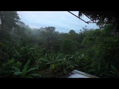 Regenwald am Abend vom Balkon