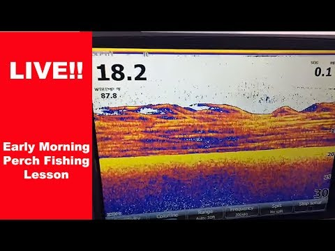 🔴LIVE!  How To Catch White Perch
