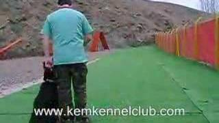 Kem Kennel Club