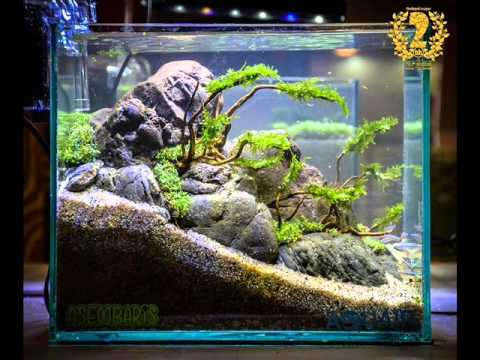 Aquascape Contest 2016 Nano Tank Youtube