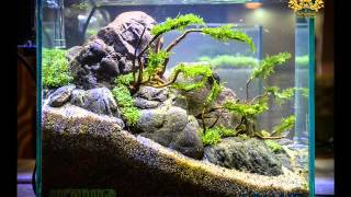 Repeat youtube video aquascape contest 2016 nano tank