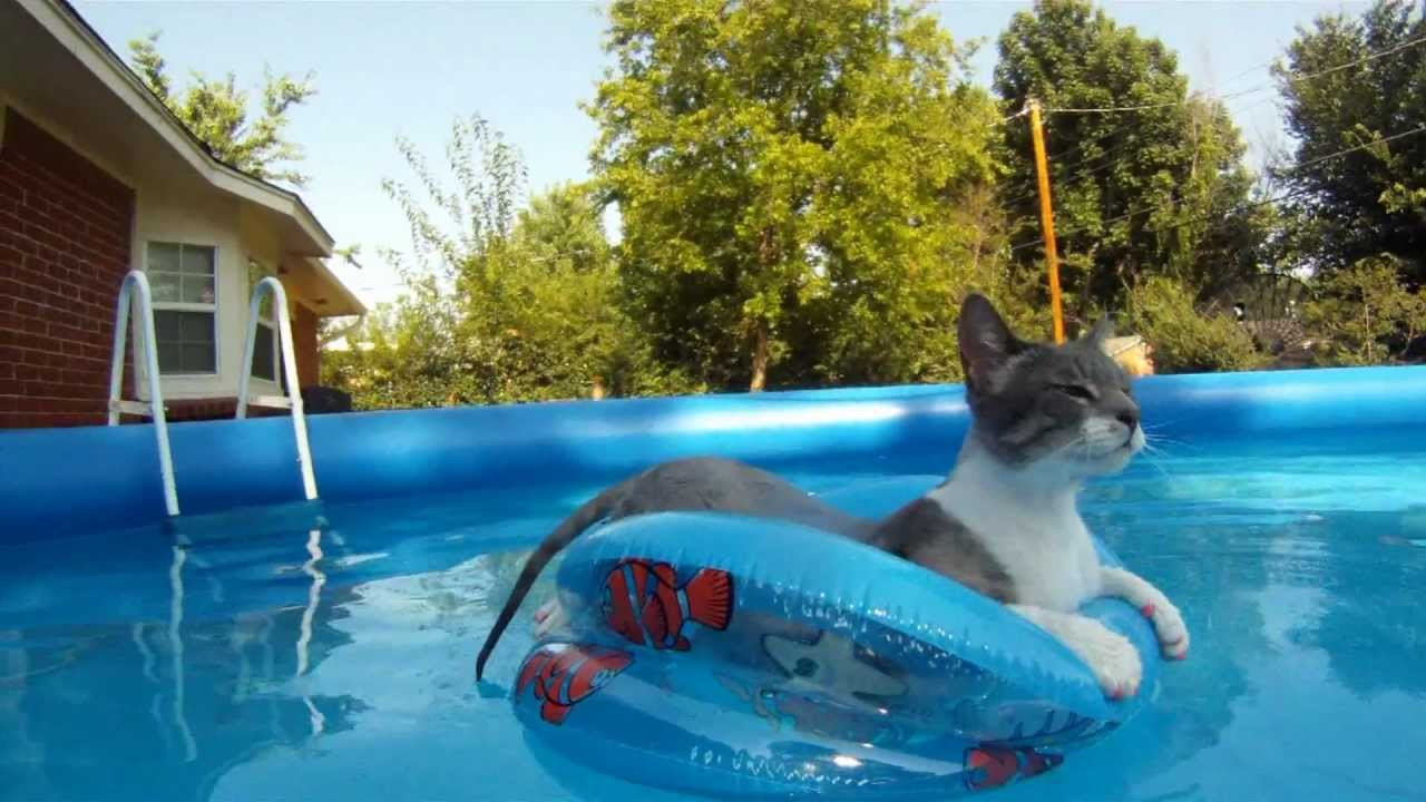 Cat Swiming And Floating In Pool Gopro Hero Youtube