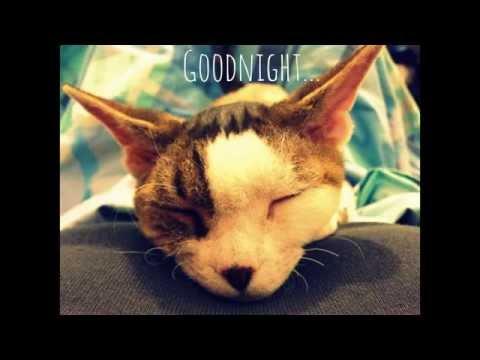 Extra cute goodnight by Devon Rex cat Uendi.