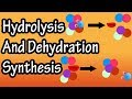 Dehydration Synthesis And Hydrolysis - What Is Anabolism - What Is Catabolism