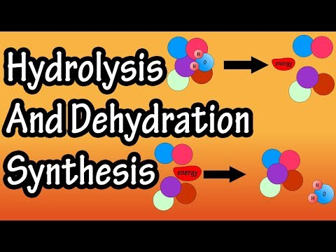 dehydration-synthesis-and-hydrolysis---what-is-anabolism---what-is-catabolism