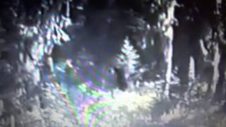 Paul Freeman Bigfoot Footage ( FULL LENGTH ORIGINAL FOOTAGE)