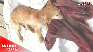 Sad Stray Puppy from Severely Injure to Very Playful