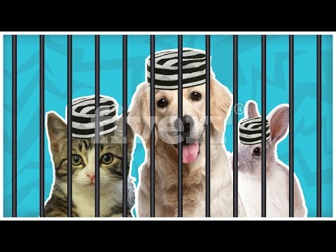 ANIMALS that have went to JAIL???