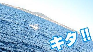 爆釣‼長崎県五島沖で「高級魚5種」達成‼