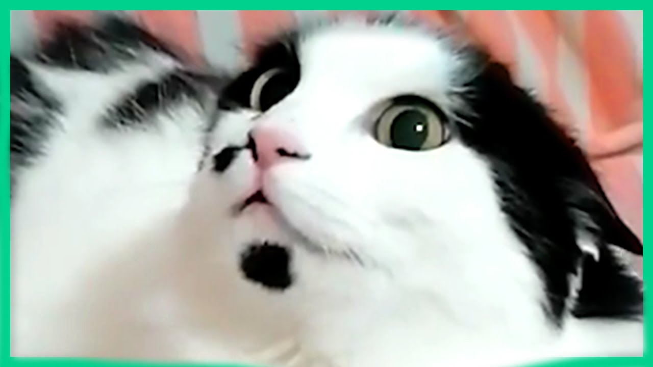 THE BEST ANIMAL VIDEOS OF THE WEEK! Funny and Cute Videos