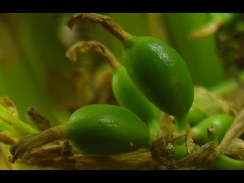 How to Grow Cardamom - TvAgro by Juan Gonzalo Angel