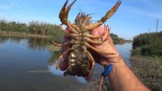 7 РАКОВ за один заброс Кастинговой сети Рыбалка на ШЛЮЗОВЫХ каналах