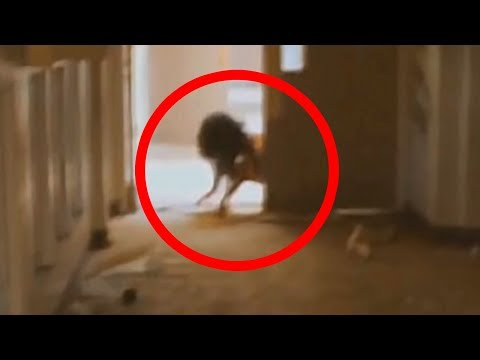 5 Scariest Creatures Caught On Camera & Spotted In Real Life! from YouTube · Duration:  6 minutes 12 seconds