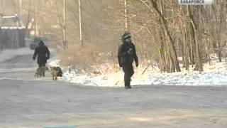 Вести-Хабаровск. В Комсомольске-на-Амуре убивают собак