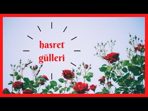 Hasret Güllerini Serdik Yollara - Müziksiz İlahi / Ömer Faruk Demirbaş