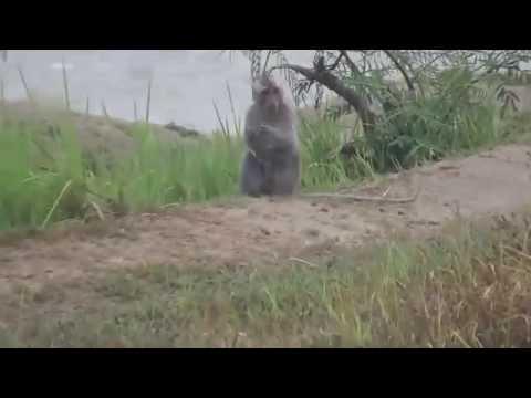 baboon dating