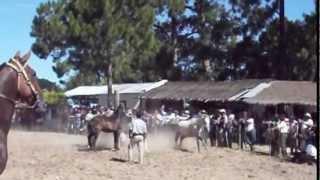 Patronales 2013 Palmar Grande