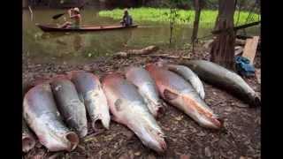 Слайд-шоу Ловись рыбка большая и маленькая