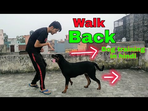 How to teach Your Dog Walk Backwards In Hindi || Best Dog Tricks || Review reloaded