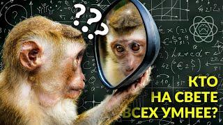 Глупые вопросы об умных животных