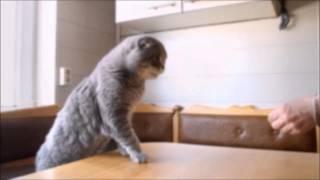 Смешное видео Забавные котята Приколы 2015