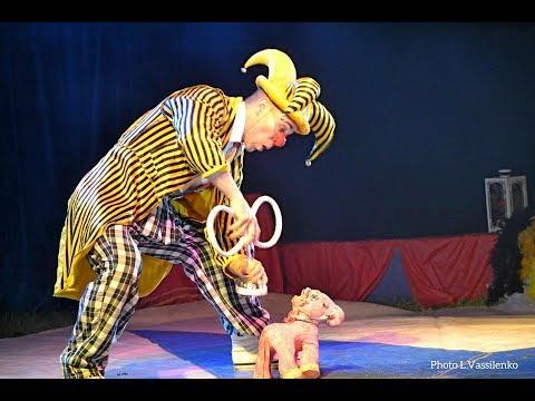 Clown Dog Circus