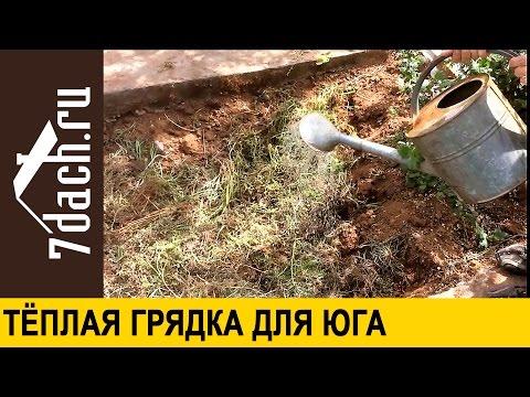 Огурцы в теплице. Как выращивать огурцы в теплице