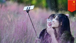 Chinese tourists destroy rare pink grass to take selfies - TomoNews